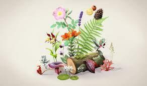 Botanique - S764 - Vie et diversité des plantes - Tous niveaux