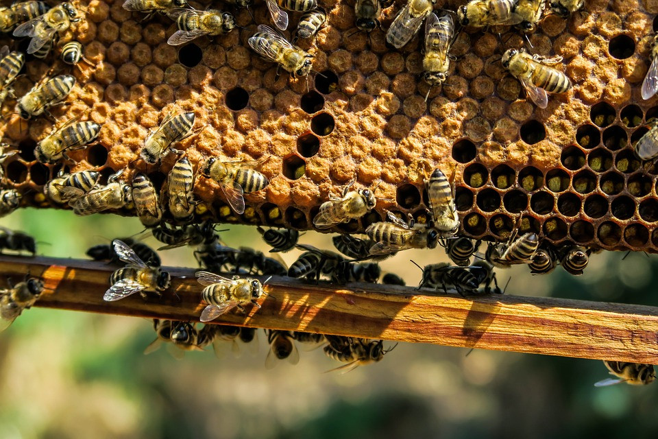 Apiculture - S762A - Adultes