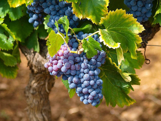 Oenologie - N813 - Parfaire vos connaissances dans l'Univers du vin - Initié / Confirmé